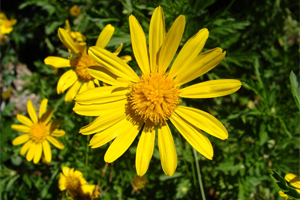 Consulta de Homeopatía en Clínica Sanares